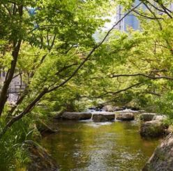 국내 대표 힐링 숲! 화담숲과 둘러보기 좋은 경기도 광주 여행지 추천