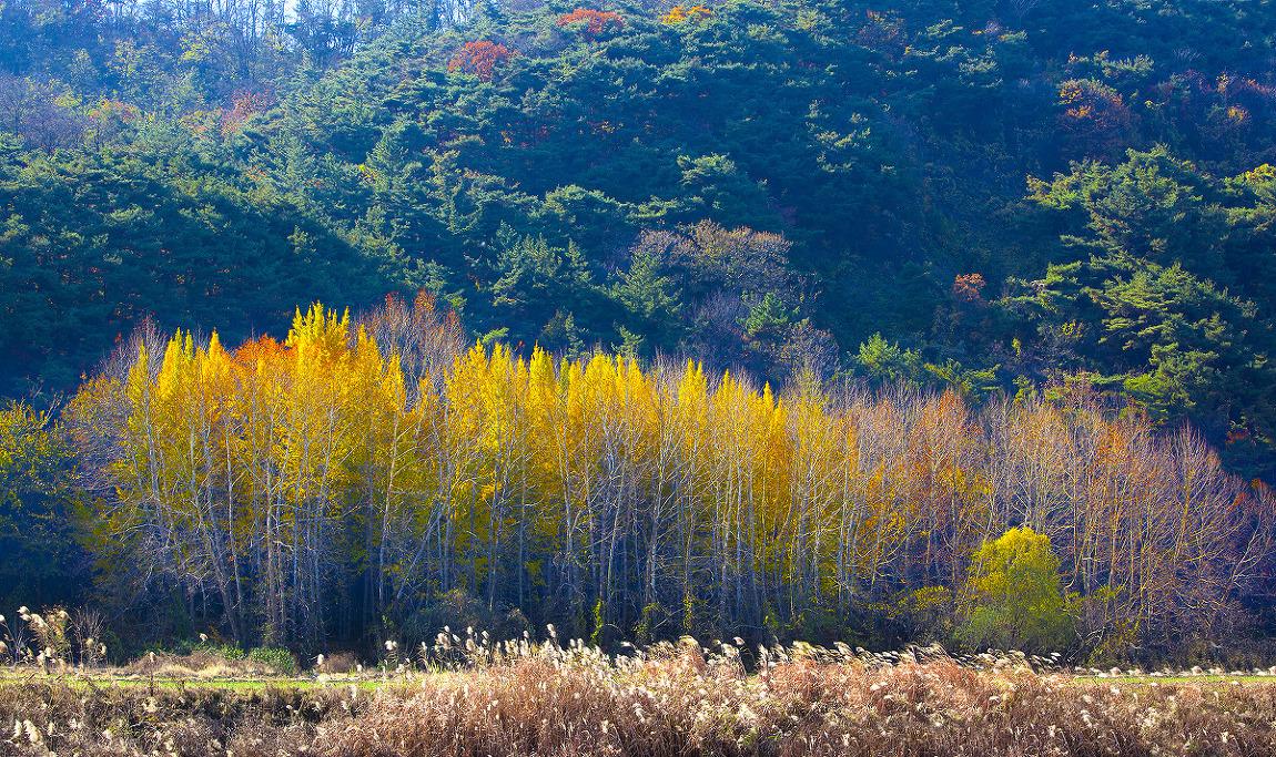 가을빛.1