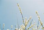 나도, 봄 사진 올리고 싶어,