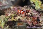 해수 어항 생물 투입 3일차, 니모와 클리너 쉬림프의 먹이 쟁탈전 !