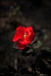 #86 The flower