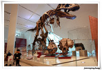 [39m+] 토론토 - Royal Ontario Museum (ROM) 구경