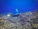 전설적인 푸른 바다, 마리아나 제도 로타섬 스쿠버다이빙