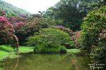 진분홍 배롱나무꽃 가득 반겨주는 담양 명옥헌 원림