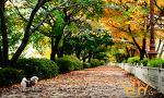 [오늘의 사진] 가을 산책