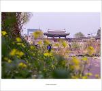 #01. 수원 행궁동벽화마을