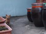 배고픈 고양이 - 20140909