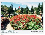 [적묘의 베트남]봄을 담는 달랏, Truc Lam 사원의 꽃향기