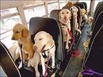 독일은 개도 버스 요금을 낸다?