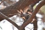 올림픽공원 봄소식, 귀여운 동물 친구들