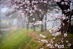 봄의 소식2