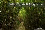 거제 샛바람소리길. 이름만큼이나 싱그러움이 가득한 대나무 숲길