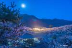 광양 매화마을, 꽃눈 가득 내린 새벽 풍경