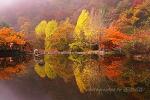 가을愛 물들다
