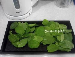 스피아민트 생잎으로 허브차 즐겨요