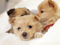 빡스떼기 강아지들 ㅋㅋㅋㅋ
