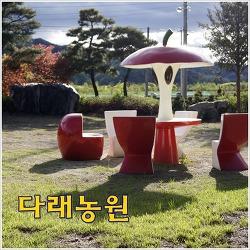 [영월농촌체험농장] 다래농원 - 빠알간 사과가 가득!