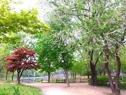 서울숲 공원 산책