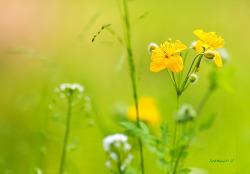 노란꽃과 금낭화