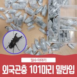 외국곤충 101마리를 여행용 가방에 숨겨 밀반입