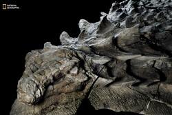 [번역] 앨버타(Alberta)에서 발견된 새로운 공룡 화석이 너무 잘 보존되어 있어서 마치 조각상처럼 보인다. - <ScienceAltert>, 2017