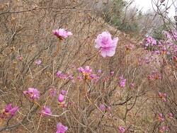 """즐거운 휴일~♥원미산 진달래꽃 보고왔어요 """"깨끗하고 쾌적한 산림"""" 현수막 보고 환경을 사랑하는 국제위러브유(장길자 회장님)의 클린월드운동 거리정화가 생각났어요^^"""