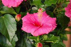 에버 블루밍 썸머의 10가지 꽃들