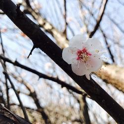 2017 제주의 봄