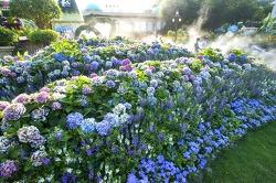 에버랜드, 여름꽃 정원에 펼쳐진 '그랑 블루'