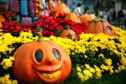 가을 에버랜드는 국화 천국!