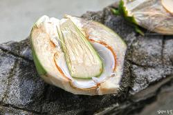 환상적인 코코넛 맛, 몰디브 마미길리 원주민의 일상을 엿보다