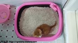 평판형 고양이화장실로 바꾸다.