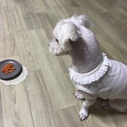 강아지 눈건강을 위한 자연간식 당근당근