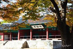 너무나 아릉다운 성균관 은행나무에 내려앉은 가을 - 서울 단풍명소 가볼만 한곳