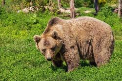 곰을 만났을 때 대처 방법