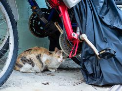 거리의 고양이 8/Cats in the street 8