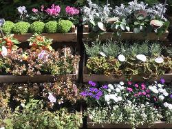 Paris, 생제르맹 시테섬 꽃시장.