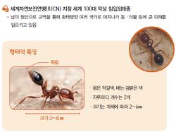 붉은불개미 신속대응자료