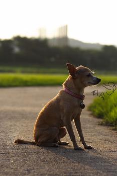 13년을 함께한 개, 미니를 떠나보내며.