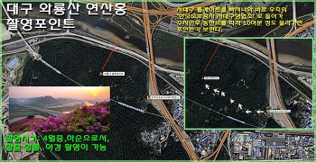 대구 와룡산 연산홍 포인트