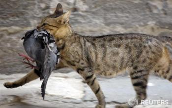 [고양이 먹이에 관한 궁금증 10가지]고양이가 먹어도 되는 음식과 안되는 음식