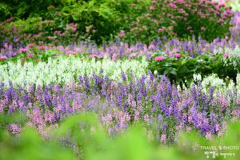 순천만 국가정원, 아름다운 정원에서 즐기는 꽃들과의 산책