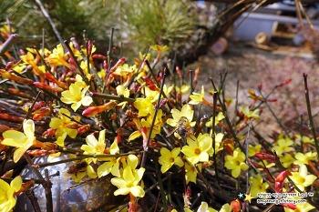봉구네 전원일기 3월(2) - 바빠지기 시작한 시골의 봄일상