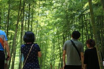 대나무숲에서 죽림욕테라피를! 거제 맹종죽테마공원