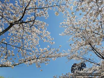 벚꽃놀이의 숨겨진 명소
