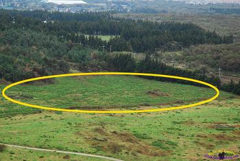 외래식물에 파괴되는 제주 생태계, 제주들판을 뒤덮은 도깨비가지