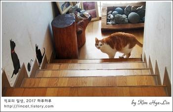 [적묘의 고양이]노묘에게 캣타워가 필요없는 이유,18살이란다~