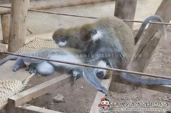 서울동물원 추천 실내동물원! 아프리카 정글원숭이관,유인원관,곤충관!