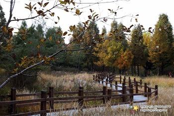 가을가을한 감성 만끽할 수 있는 '당일치기 가을소풍지 3곳'
