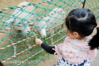 [인천 송도 여행] 도심 속 이색 나들이, 늘솔길공원 양떼목장